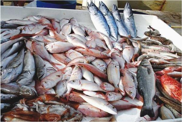 Côte d'Ivoire-Ressources halieutiques : La réglementation du secteur en question